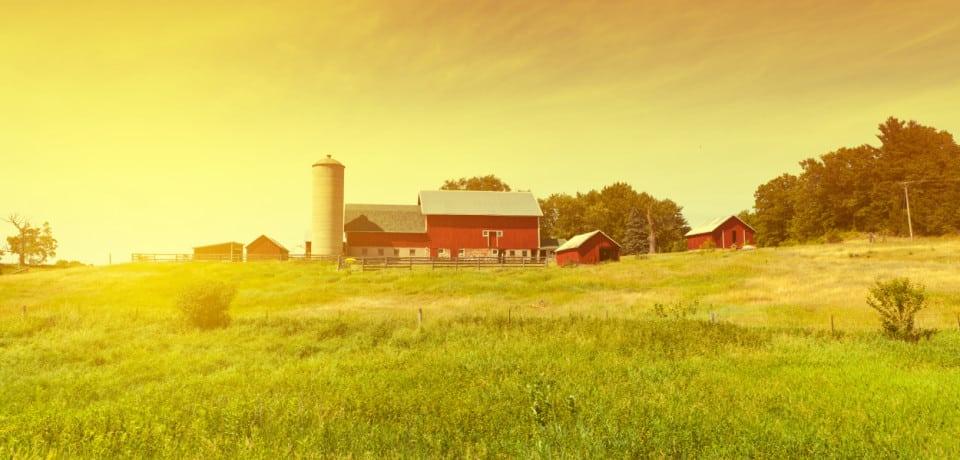 upstate farm, where dead code goes