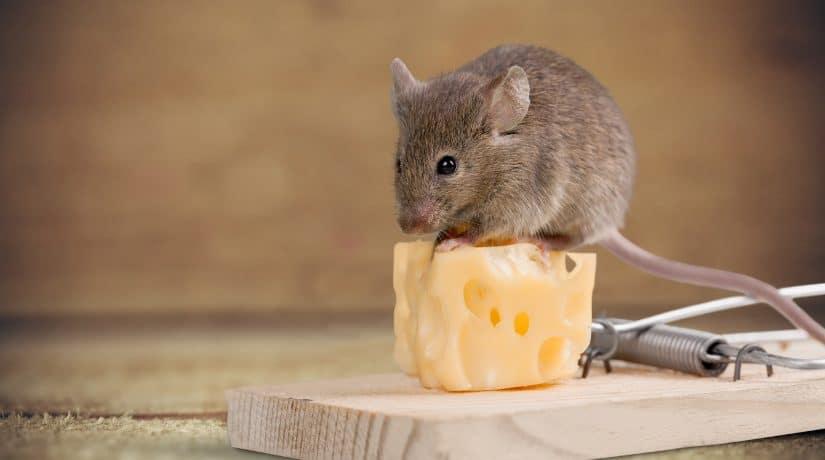 managing risk mouse
